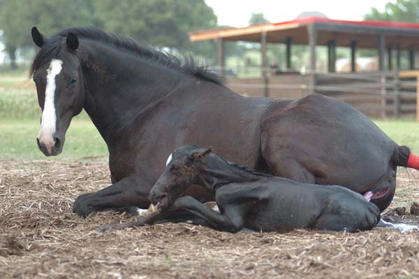 Play Laying Foals Horses Pics And Down