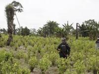 La política de drogas y el contrato social en Colombia