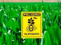 Prohibición de las fumigaciones de glifosato y principio de precaución: ¡Una relación compleja!