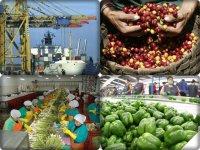 Por qué Perú sí tiene éxito con nuevos productos agrícolas de exportación