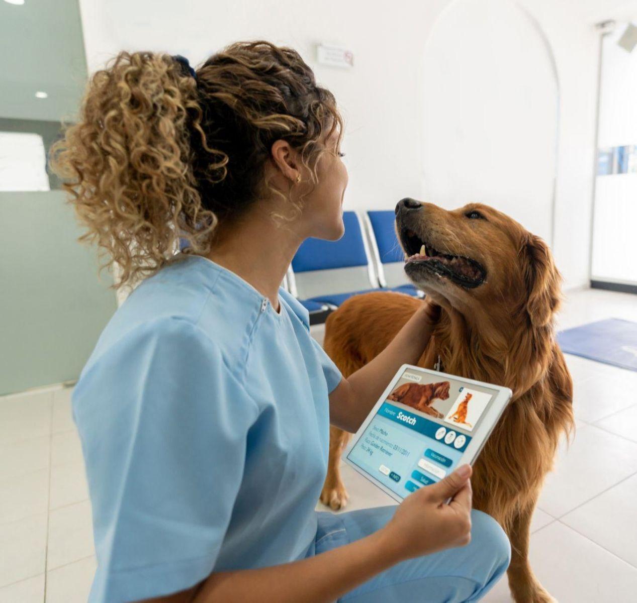 ветеринарная клиника, собака, врач, чипирование, регистрация домашних жи...