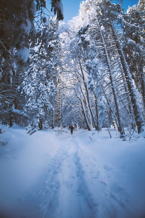 focus-aventure-chartreuse-hiver-randonnee-foret