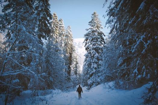 focus-aventure-chartreuse-la-pinea-foret-hiver