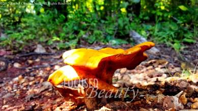 """""""Micro Mushroom 2"""" taken by Rachel Cancino-Neill in Erbie, Arkansas: 2015"""
