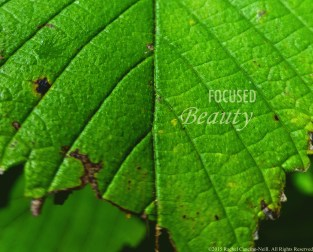 """""""Leafy Green"""" taken by Rachel Cancino-Neill at Roaring River State Park: 2015"""