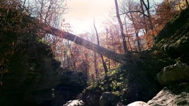 """Beaming Light"" by Rachel Cancino-Neill taken on Buffalo River Trail, Arkansas: 2015"