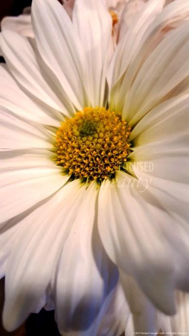 Daisy Upclose 2