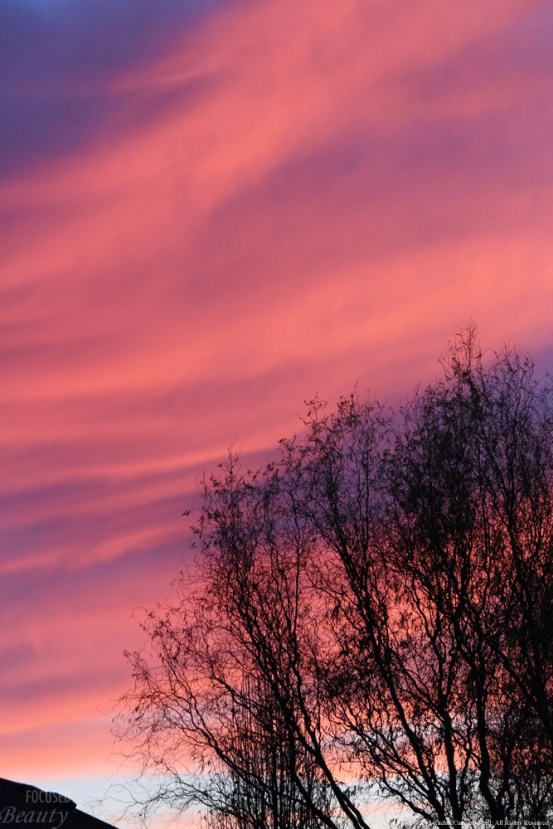 """Royal Morning 5"" by Rachel Cancino-Neill"