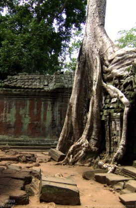 The Raining Tree
