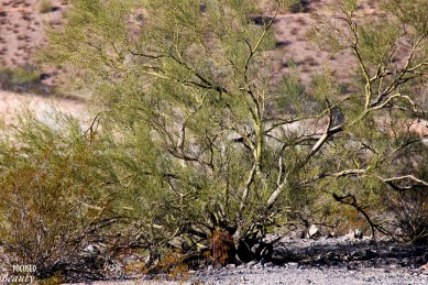 Warping Tree
