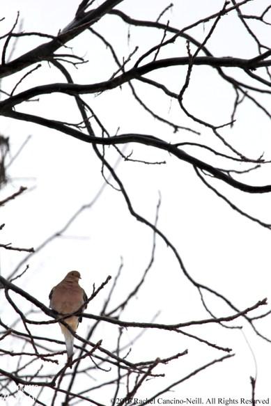 Bird sitting on the branch_edited-1