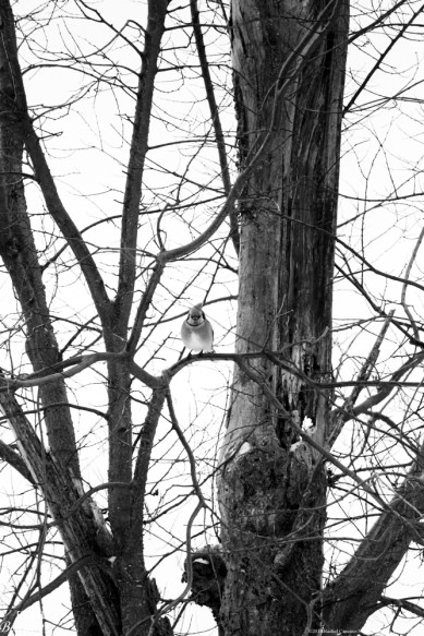 BW Bird sitting on branch