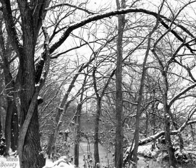 Overarching Tree