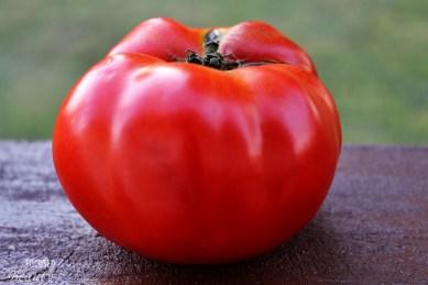 Heirloom Tomato 7