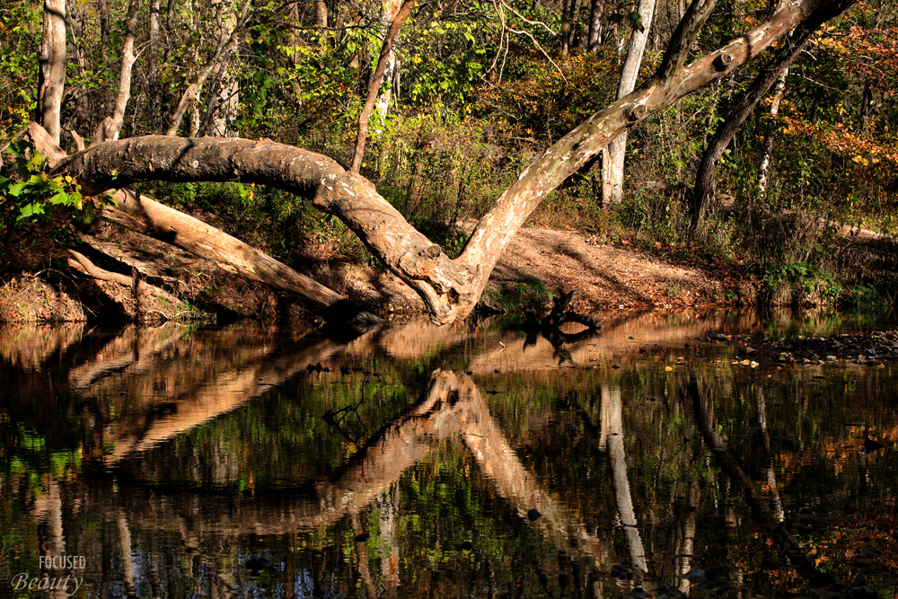 a-trees-reflection-over-the-water