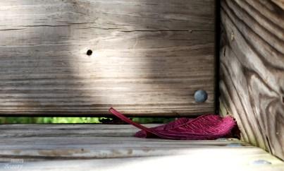 purple-leaf-on-bench