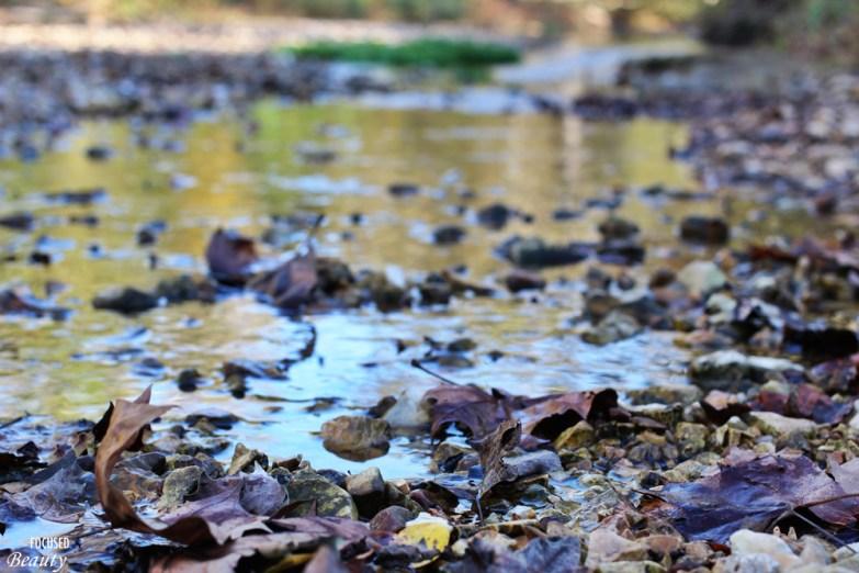 the-leaf-looking-upstream