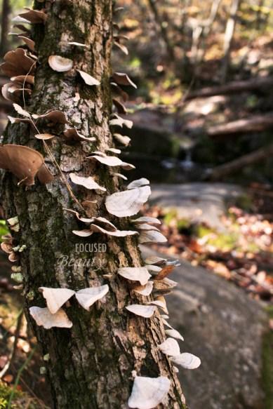 mushrooms-growing-on-a-tree