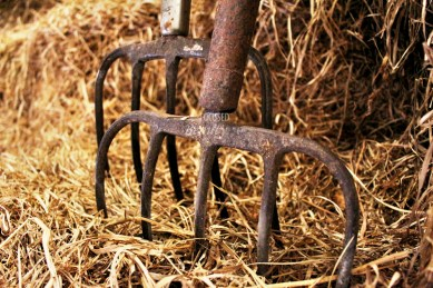pitchforks-in-the-hay