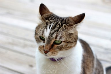 The listening cat