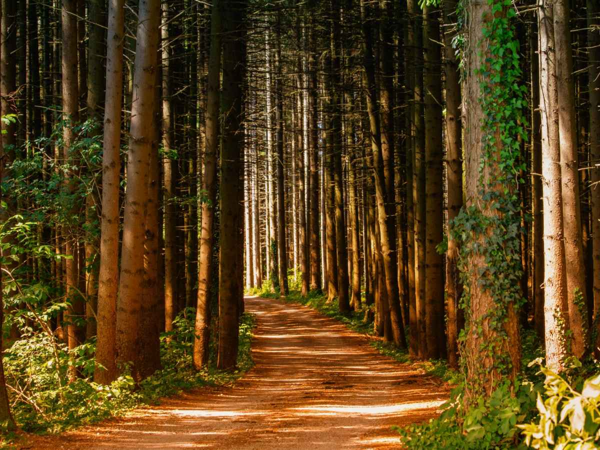 pathway in between trees at daytime