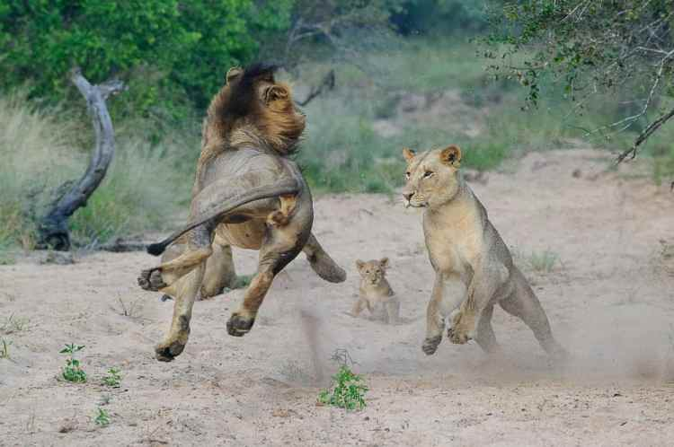 'Catch me if you can!' by Tom Coetzee