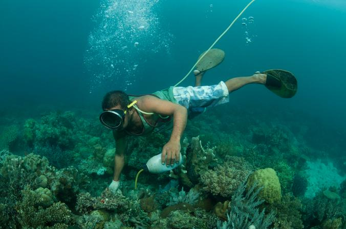 Conserving the Great Barrier Reef