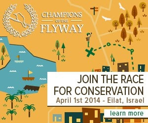 """Join the """"Race for Conservation"""" in Eilat Israel"""