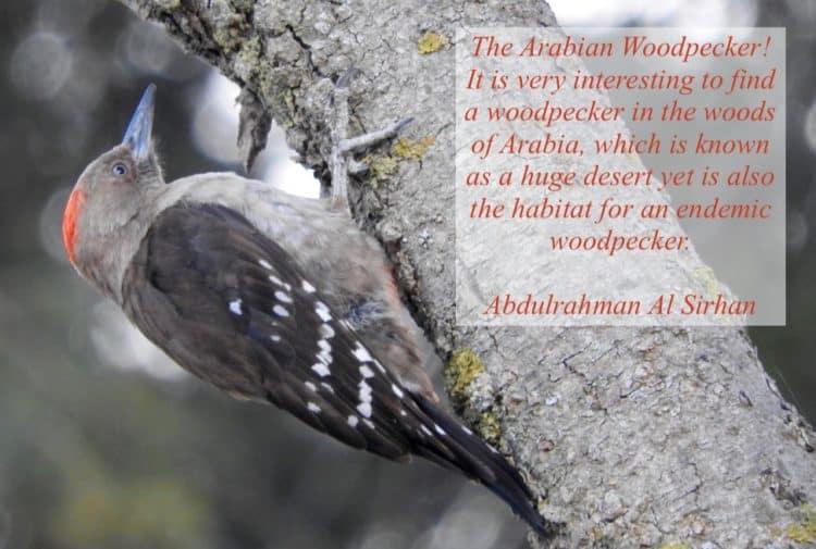 For the Love of Arabian Birds: An Interview with Abdulrahman Al Sirhan