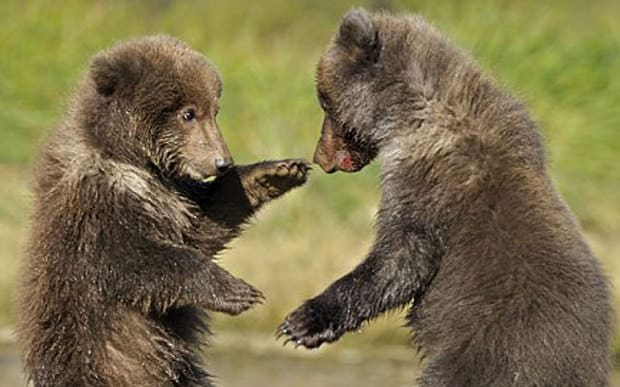 Cute Baby And Mom Wallpaper Poll When Bears Kill Humans Should They Be Slaughtered