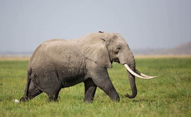 Mammals that rival our intelligence
