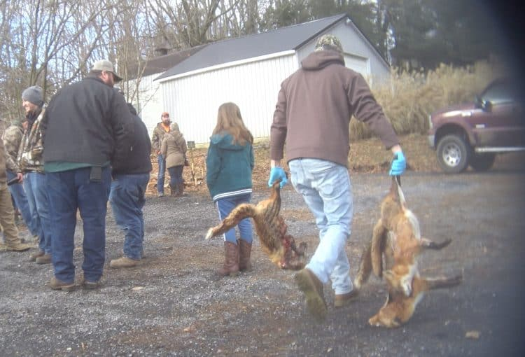 Wildlife killing contest ban considered in Maryland