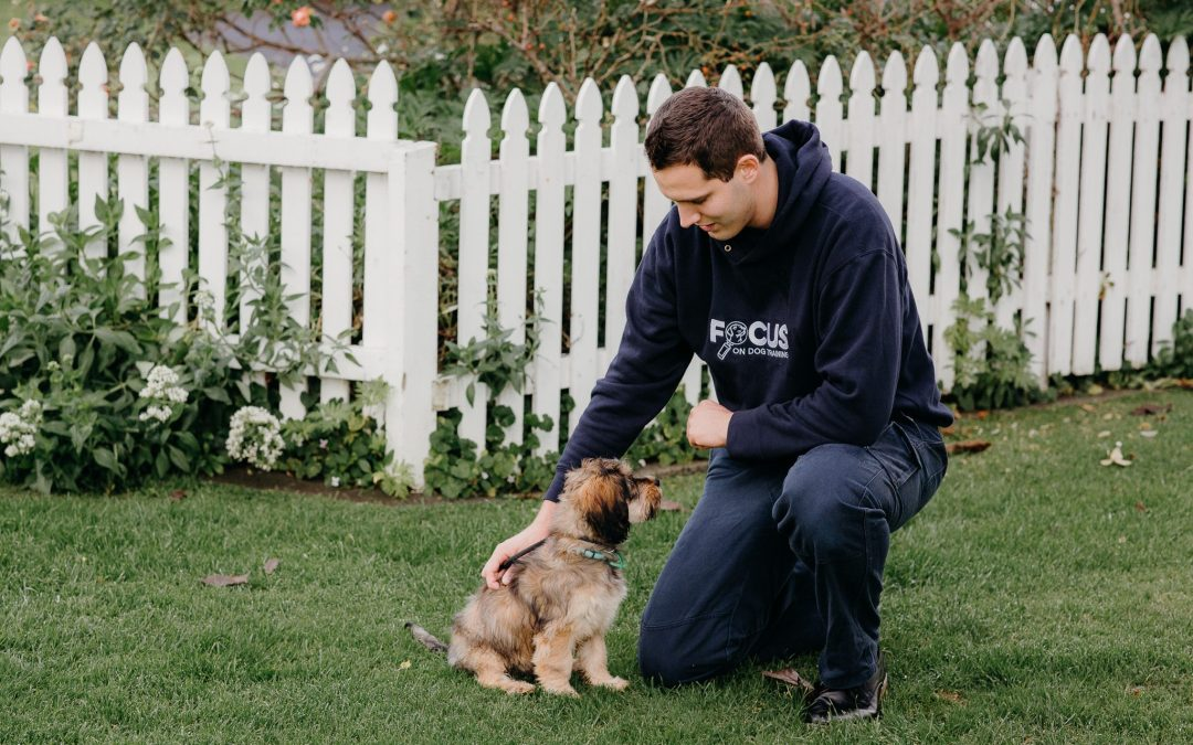 Basic dog obedience