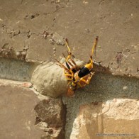 Inserting a spider in another nest