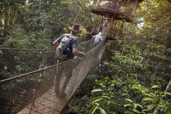 Peru_Amazon_Jungle_Suspension_Bridge-1N9A1083_processed_Lg_RGB