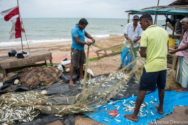 Fresh fish to sell, Sri Lanka.