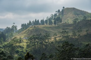 Views from the train to Nanu Oya, Sri Lanka