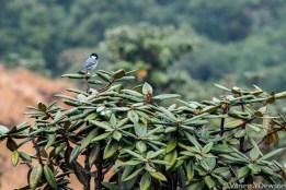 Bird on rhododendron