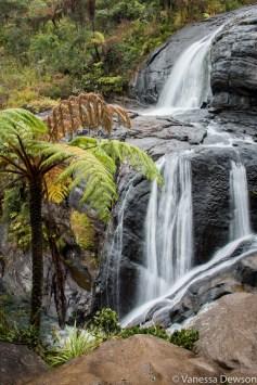 Giant fern tree and Baker's Falls, Horton Plains, Sri Lanka
