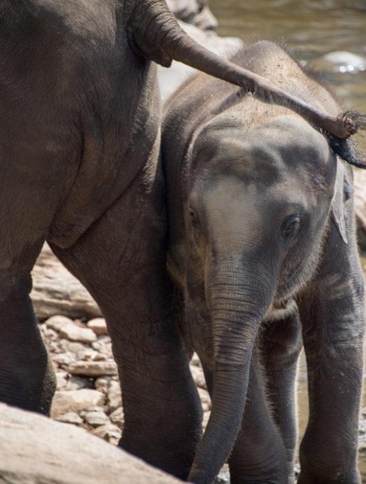 Sri Lanka Photo Tour Blog – Day 3