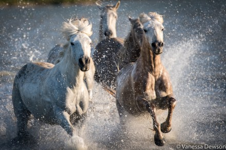 Action! Photo by: Vanessa Dewson