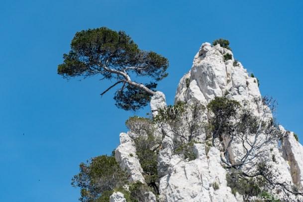 A bold tree. Photo by: Vanessa Dewson