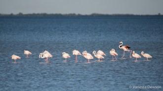 Flamingos in the Camargue. Photo by: Vanessa Dewson.