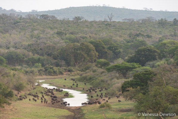 Mfolozi River