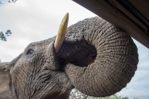 Thula Thula Elephant