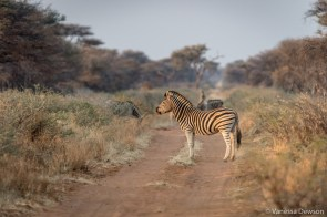 Zebra crossing.