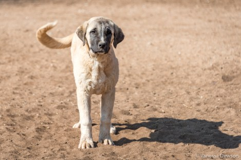 A 4-month old puppy