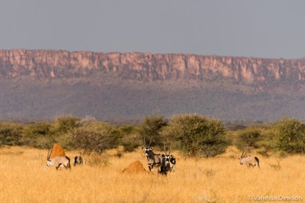 Oryx in front of the Waterberg Plateau