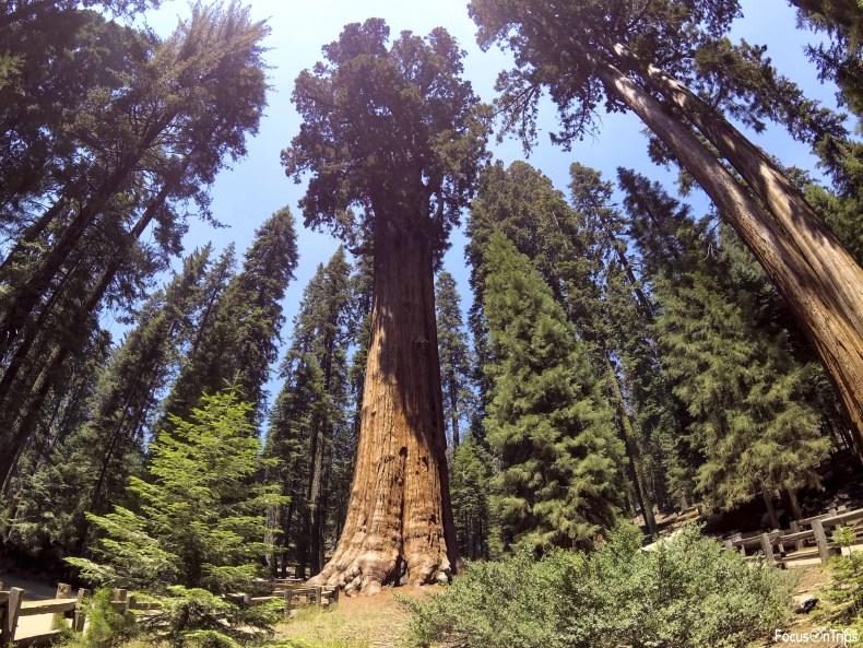 General Sherman Sequoia National Park