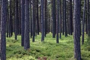 forest-1392301-1279x852.jpg